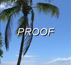 Oahu Palm (2)