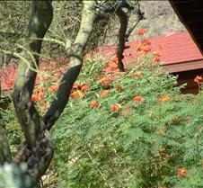 Tucson Lazy K flower 4