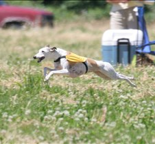 Whippets_7July_Run1_Course6_4140CR
