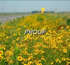 06%2F25%2F2014+Wildflowers