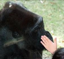 J Zoo 0611_159