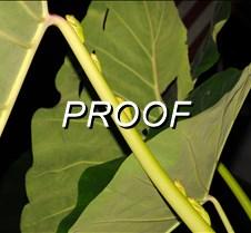 09%2D21%2D2015+Green+Tree+Frogs