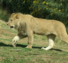 Wild Animal Park 03-09 192