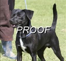 082013_Pet(Dog)