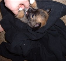 Puppy Picts 037