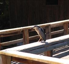 RailWalkerBird