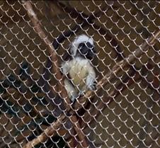 J Zoo 0611_051