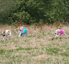 Whippets_8July_Run2_Course1_4921CR