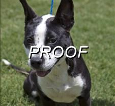 070213_POW-dog