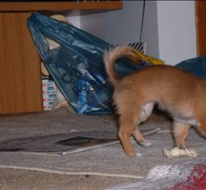 puppy picts 9-21-03 066