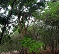 Lokuthula Safari Lodge Zimbabwe0015