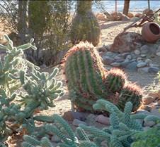 Tucson Sunlit cactus