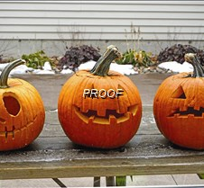 Carved pumpkins copy