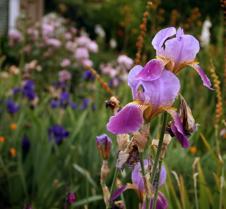Andi's Garden 21