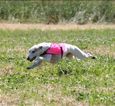 Whippets_8July_Run1_Course8_0335CR