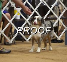 061713-dogshow-01