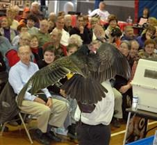 Vulture look 2