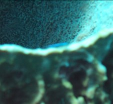 The edge of a barrel sponge