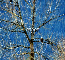 eagletree-17