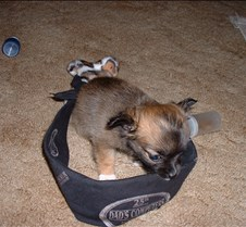 Puppy Picts 014