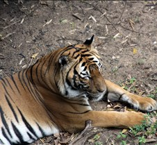 J Zoo 0611_064