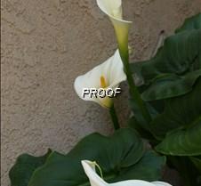 Photo taken on 03132010 @ 160016 - white