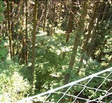 Looking down Takao Lift 2