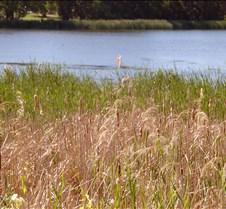 Three Rivers Mound 5K 06-20-09 049