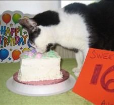 Uno's 16th Birthday Uno reaches 16. August 1st, 2013. Cake by Masako.