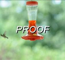 07%2F28%2F2010+Hummingbird