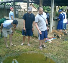 037 looking at tadpoles