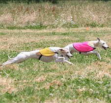 Whippets_8July_Run2_Course7_5099CR