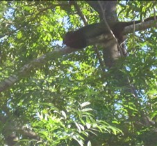 Costa Rica 2-07 005