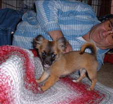 puppy picts 9-21-03 078