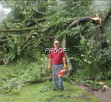 birchwood  tree down