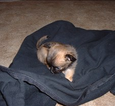 Puppy Picts 026