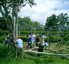 074 chopping down tree