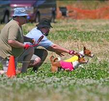 Basenji_7_July_Run1_Course2_3687CR
