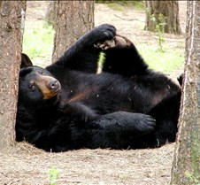 051004 Black Bear Janie 22