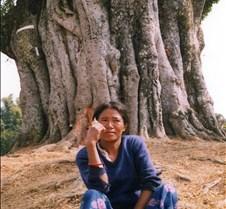 Nepal - tree