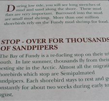 Narrative of sandpipers