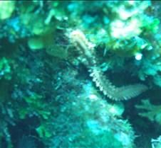 A fire worm