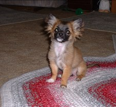 puppy picts 9-21-03 053