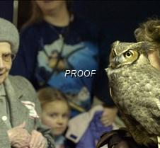 basement owl