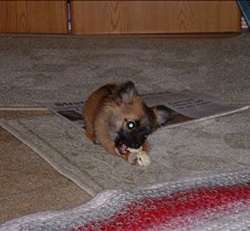 puppy picts 9-21-03 065