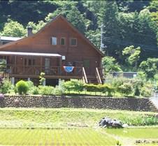 Japanese  rice field at base Mt. Takao
