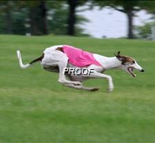 Run2_Course1_IMG_6346 copy