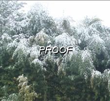 evergreenpic4Sale
