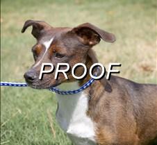 081313_Pet(Dog)