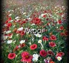 DSC03425  Wildflowers #2